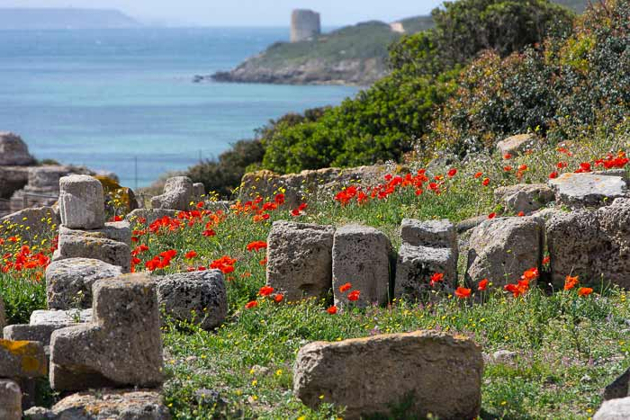 tharros ruins with poppies